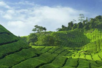 Stay in your Nest Munnar
