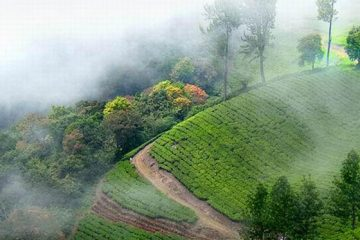 bangalore to munnar tour packages