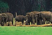 Munnar Thekkady Tour Packages