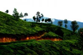 3 Night 4 Days Kerala Packages