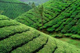 holiday in munnar