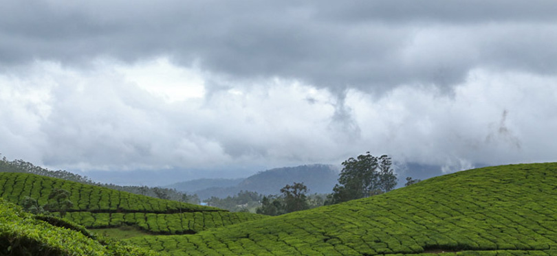 The Whispering Meadows Munnar