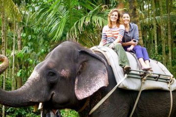 Thekkady Kumarakom Tour Packages