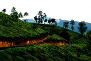 Munnar Holidays